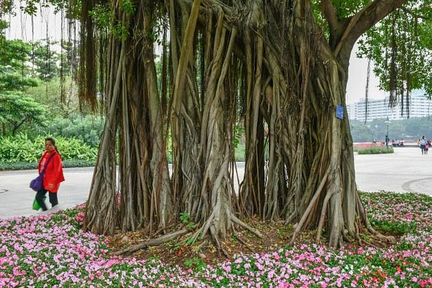 ppt素材树木根系